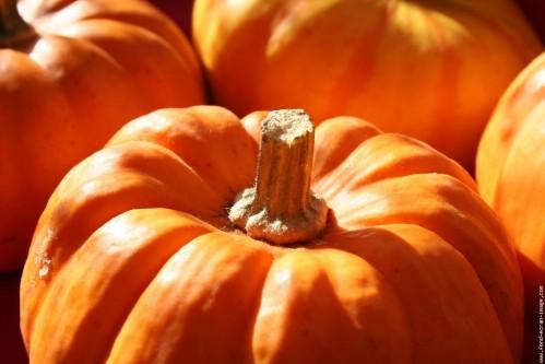 citrouilles-9-novembre-2007-052